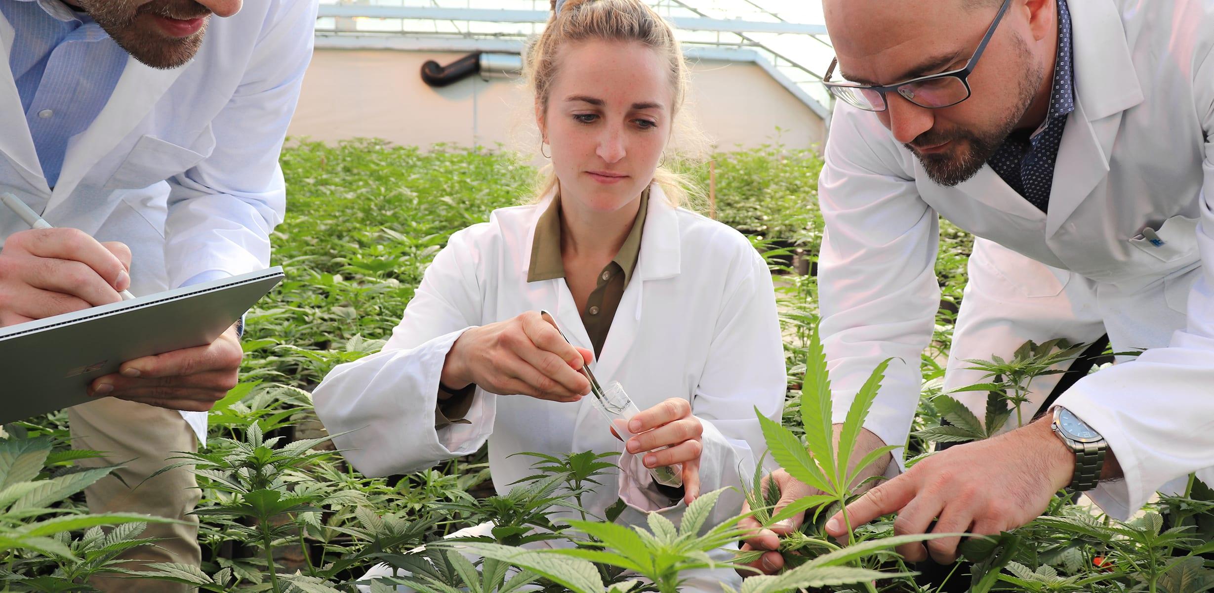 Puregene Cannabis - Trait Licensing